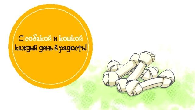 01. Собака и кошка / Inu to Neko Docchi mo Katteru to Mainichi Tanoshii